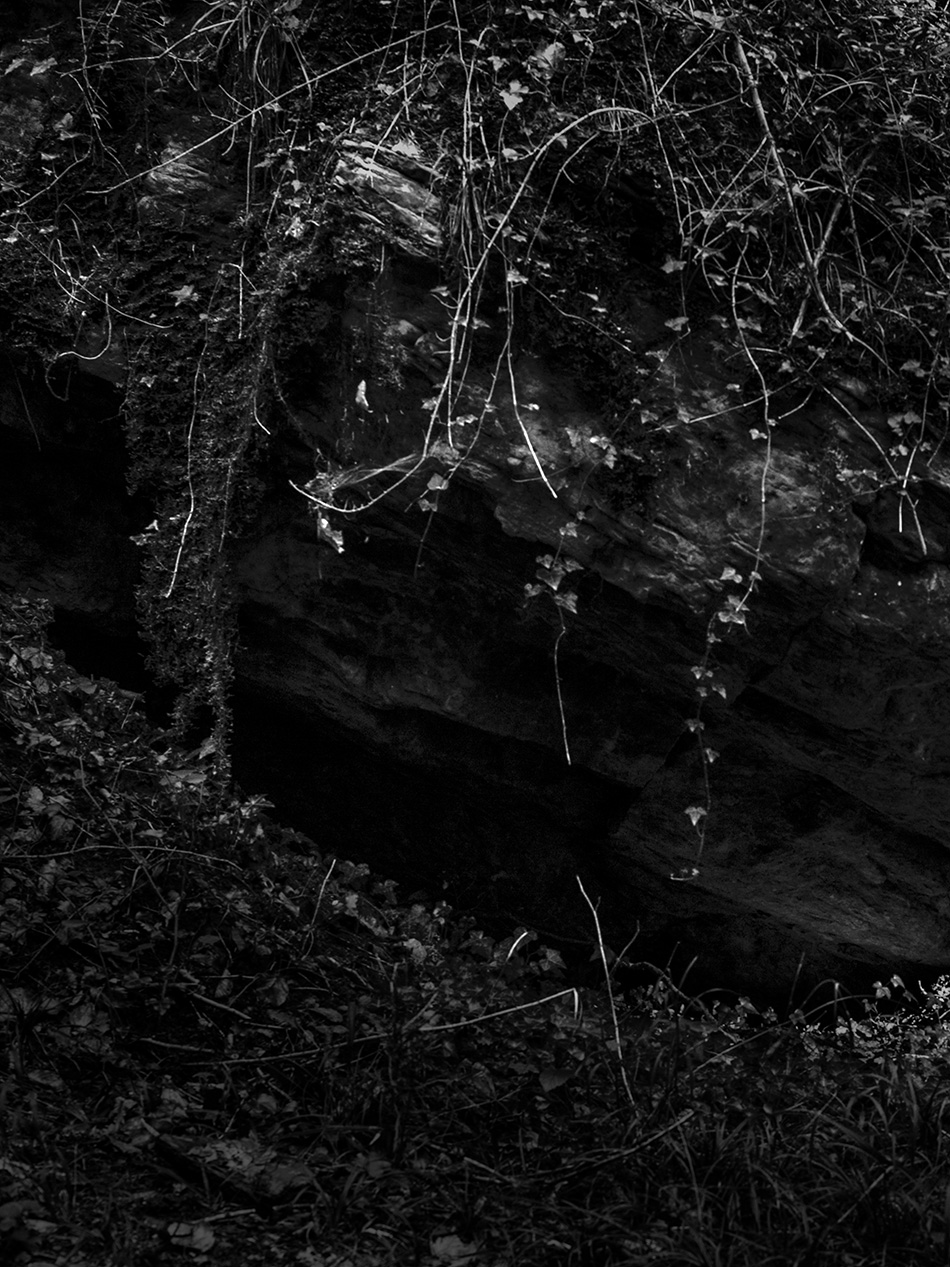 arborescence and the pillar cult_DavidAmaral005