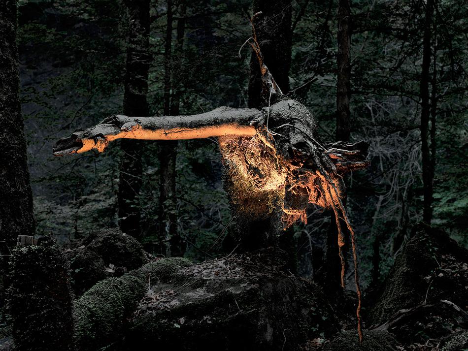 arborescence and the pillar cult_DavidAmaral010