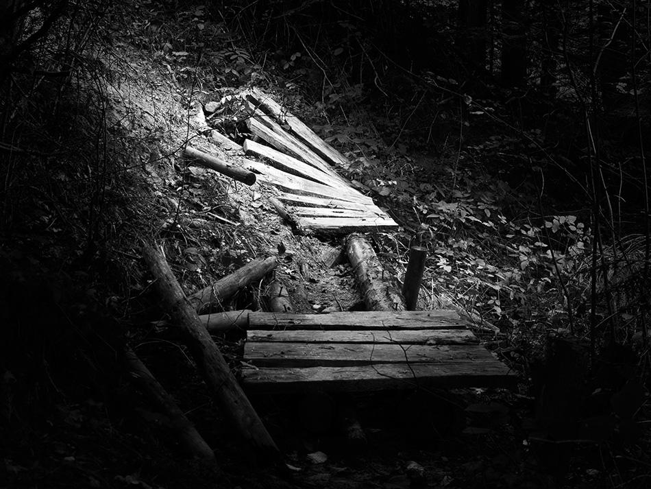 arborescence and the pillar cult_DavidAmaral013