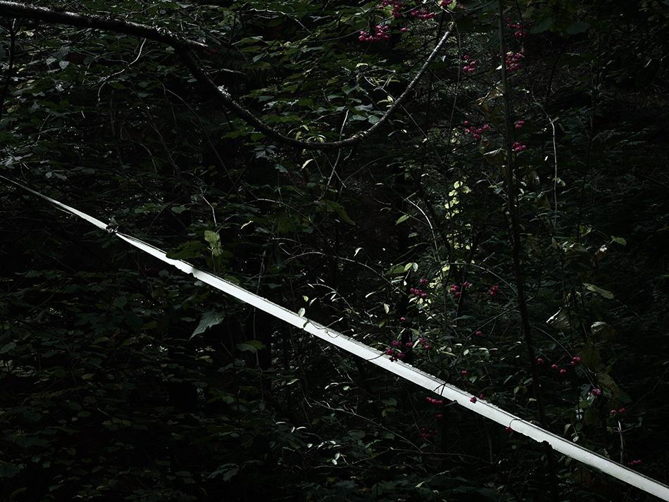 arborescence and the pillar cult_DavidAmaral014