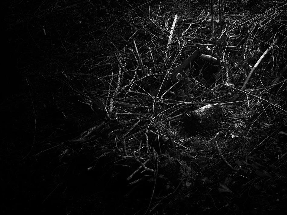 arborescence and the pillar cult_DavidAmaral015