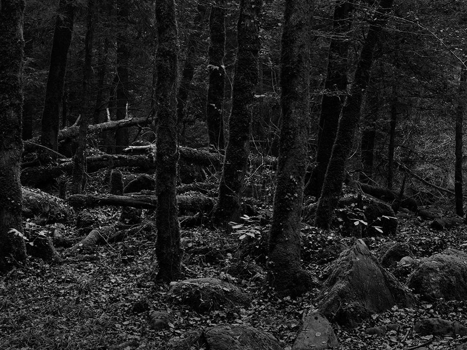 arborescence and the pillar cult_DavidAmaral020