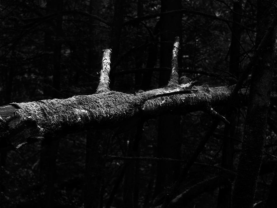 arborescence and the pillar cult_DavidAmaral021