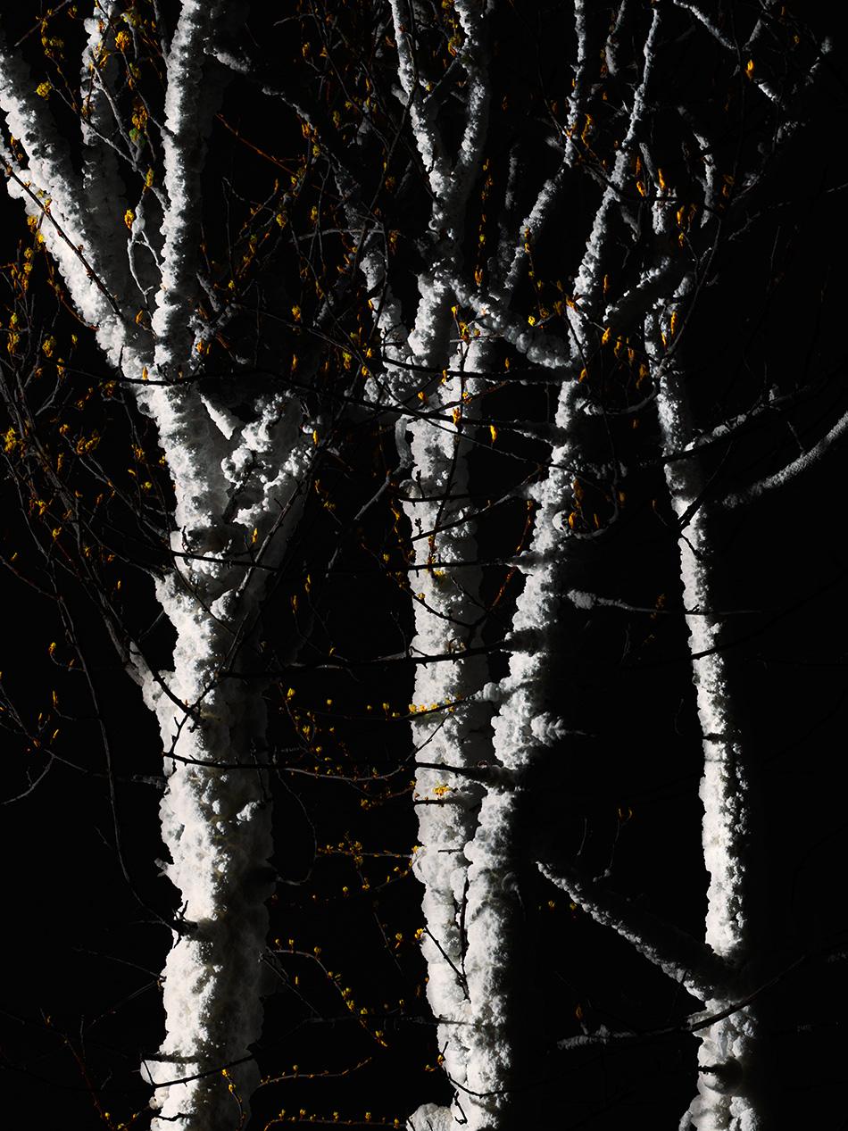 arborescence and the pillar cult_DavidAmaral029