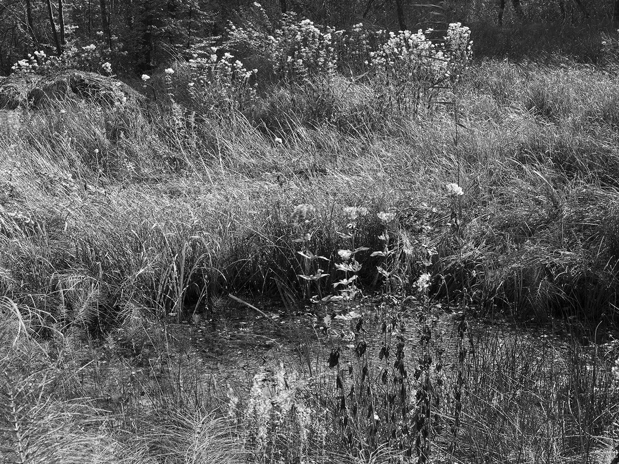 arborescence and the pillar cult_DavidAmaral046