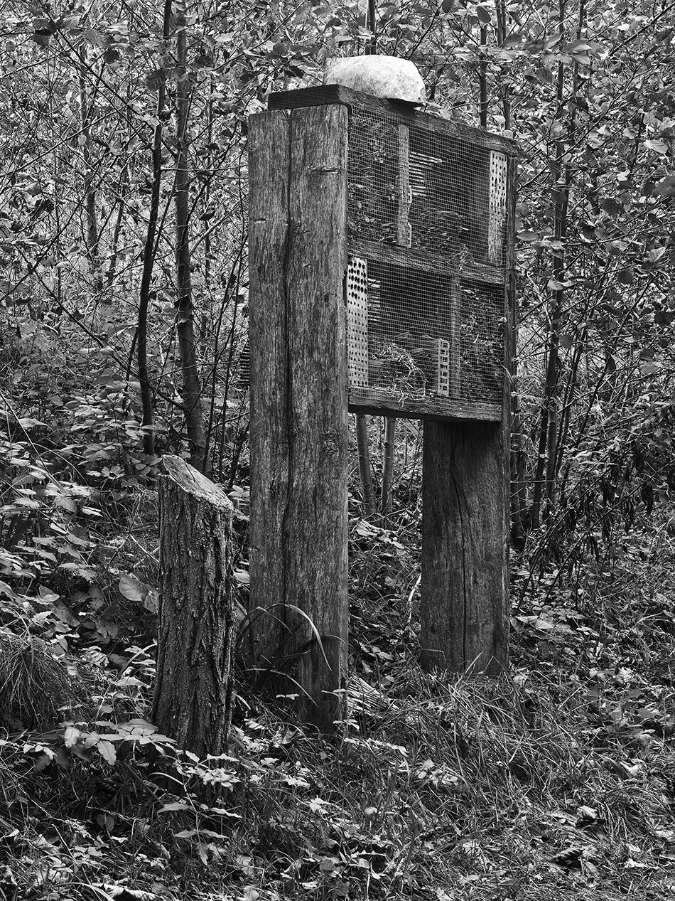 arborescence and the pillar cult_DavidAmaral048