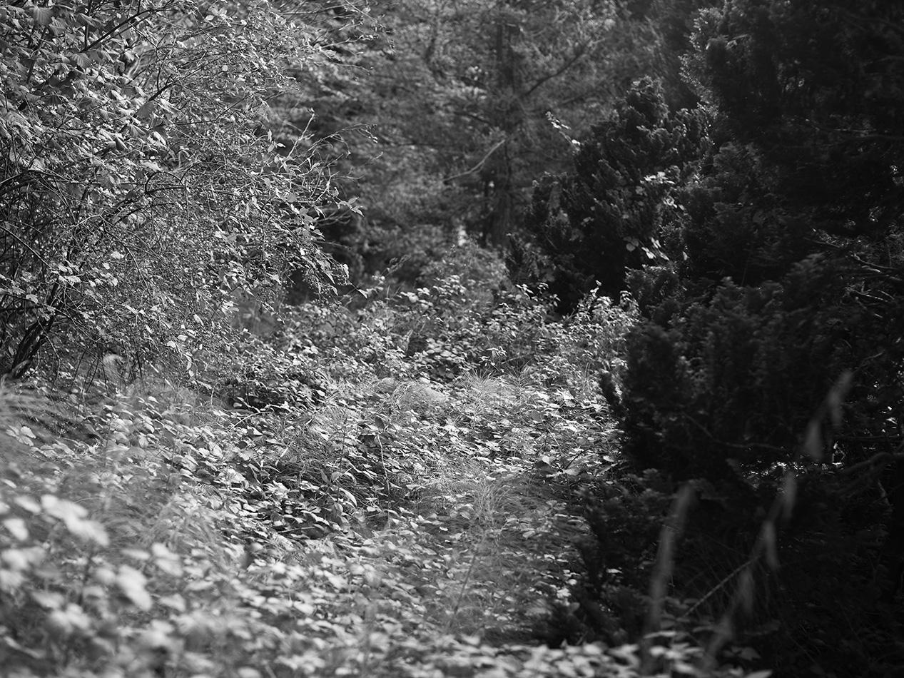 arborescence and the pillar cult_DavidAmaral049